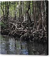 Mangrove Forest In Los Haitises National Park Dominican Republic Canvas Print