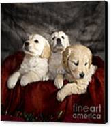 Festive Puppies Canvas Print