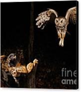 Eastern Screech Owl Canvas Print by Scott Linstead