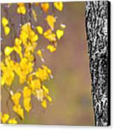 A Birch At The Lake Canvas Print