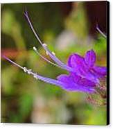 A Bit Of Purple Canvas Print by Judy  Waller