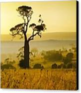 A Boab Sunrise Canvas Print