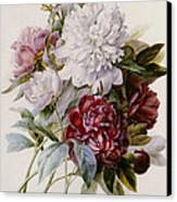 A Bouquet Of Red Pink And White Peonies Canvas Print