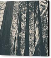 A Breath Of Fresh Air Canvas Print by Laurie Search