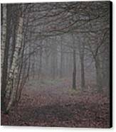 A Chill In The Trees Canvas Print