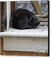A Circled Up Cat  Canvas Print by Lainie Wrightson