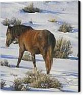 A Day In The Life Of  A Wild Horse  Canvas Print by Jeanne  Bencich-Nations
