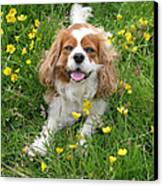 A Dog's Buttercup Heaven Canvas Print by Jo Collins