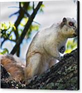 A Fox Squirrel Pauses Canvas Print