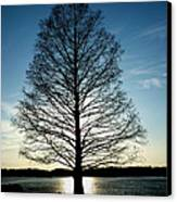 A Lonely Tree Canvas Print by Lucy D