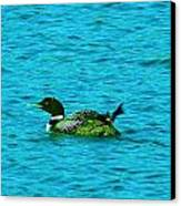 A Loonie Loon Canvas Print by Jeff Swan