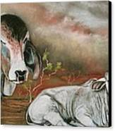 A Lot Of Bull Canvas Print by Sandra Sengstock-Miller