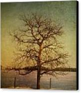 A Pictorialist Photograph Of A Lone Canvas Print by Roberta Murray