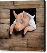 A Pig And A Poke... Canvas Print by Will Bullas