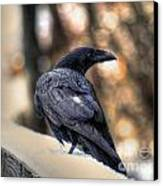 A Raven In Winter Canvas Print by Skye Ryan-Evans