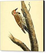 A Red Moustached Woodpecker Canvas Print by Philip Ralley