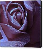 A Rose That Glitters Canvas Print