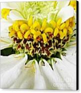 A Small Crown Of Glory Canvas Print