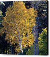 A Splash Of Yellow Canvas Print