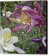 a taste of dew i do and PCC  garden too     GARDEN IN SPRING MAJOR Canvas Print by Kenneth James