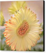 A Touch Of Sunshine Canvas Print by Fiona Messenger
