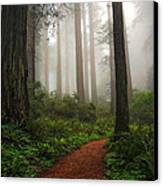 A Walk In The Fog Canvas Print by Pamela Winders