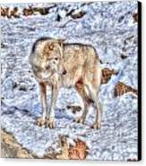 A Wolf In Winter Canvas Print by Skye Ryan-Evans