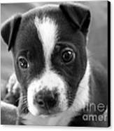 Abby The Rescued Dog Canvas Print by Deborah Fay
