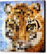 About 400 Sumatran Tigers Canvas Print by Charlie Baird