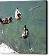 Above And Below Canvas Print by Rod Jones