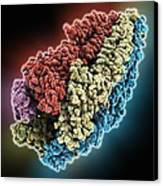 Acetylcholine Receptor Molecule Canvas Print