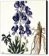 Aconitum Napellus Canvas Print by LFJ Hoquart