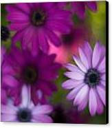 African Daisy Collage Canvas Print