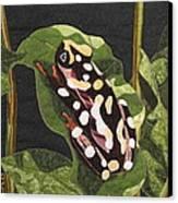 African Reed Frog Canvas Print by Lynda K Boardman