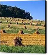 Agriculture - Contour Strips Canvas Print