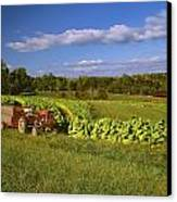 Agriculture - Fields Of Maturing Flue Canvas Print by R. Hamilton Smith