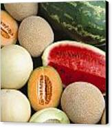 Agriculture - Mixed Melons, Watermelon Canvas Print