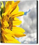 Ah Sunflower Canvas Print