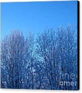 Alaska Sunrise Lighting Willows In Winter Canvas Print by Elizabeth Stedman
