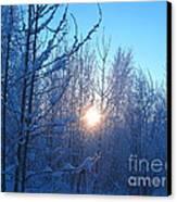 Alaska Sunrise Shining Through Birches And Willows Canvas Print