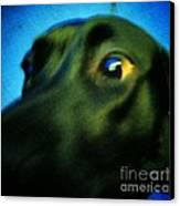Alex Has A Dog Canvas Print by Jackie Bodnar
