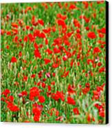 All Red Flower Beautiful Canvas Print