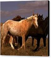All The Pretty Horses  Canvas Print by Jeanne  Bencich-Nations