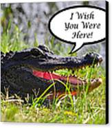 Alligator Greeting Card Canvas Print by Al Powell Photography USA