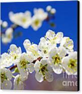Almond Blossom Canvas Print by Carlos Caetano