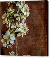 Almond Blossom Canvas Print by Marco Oliveira