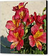 Alstroemeria In Pastel Canvas Print