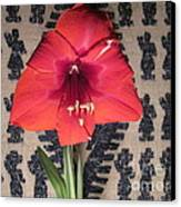 Amaryllis Flower With Guatemalan Mountain Blanket Canvas Print by Elizabeth Stedman
