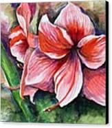 Amaryllis Canvas Print by Lenore Gaudet