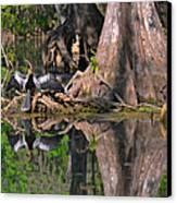 American Anhinga Or Snake-bird Canvas Print by Christine Till